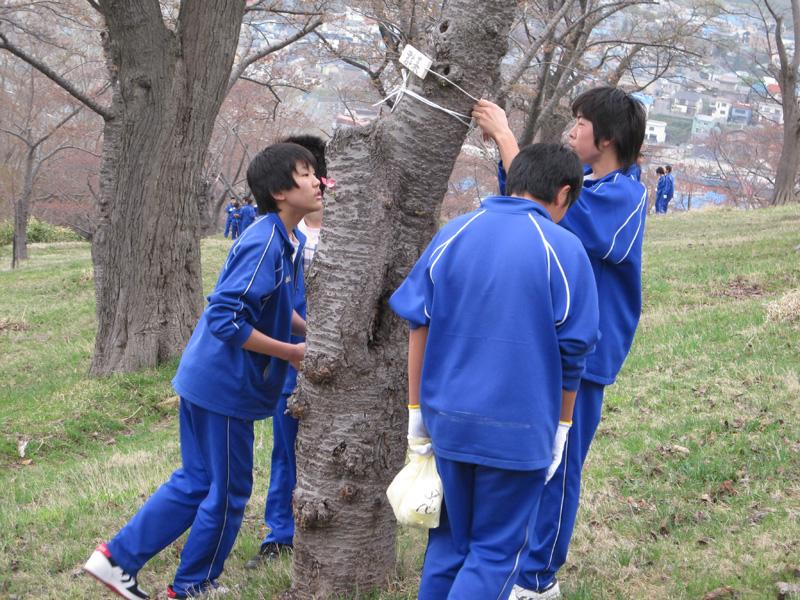 手宮公園で活躍する末広中学校生徒